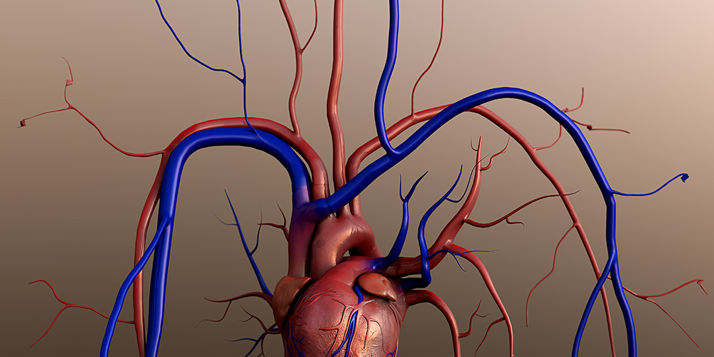 V-Healthy! Doctors and Allied Healthcare Professionals Teach Teens about Vascular Health